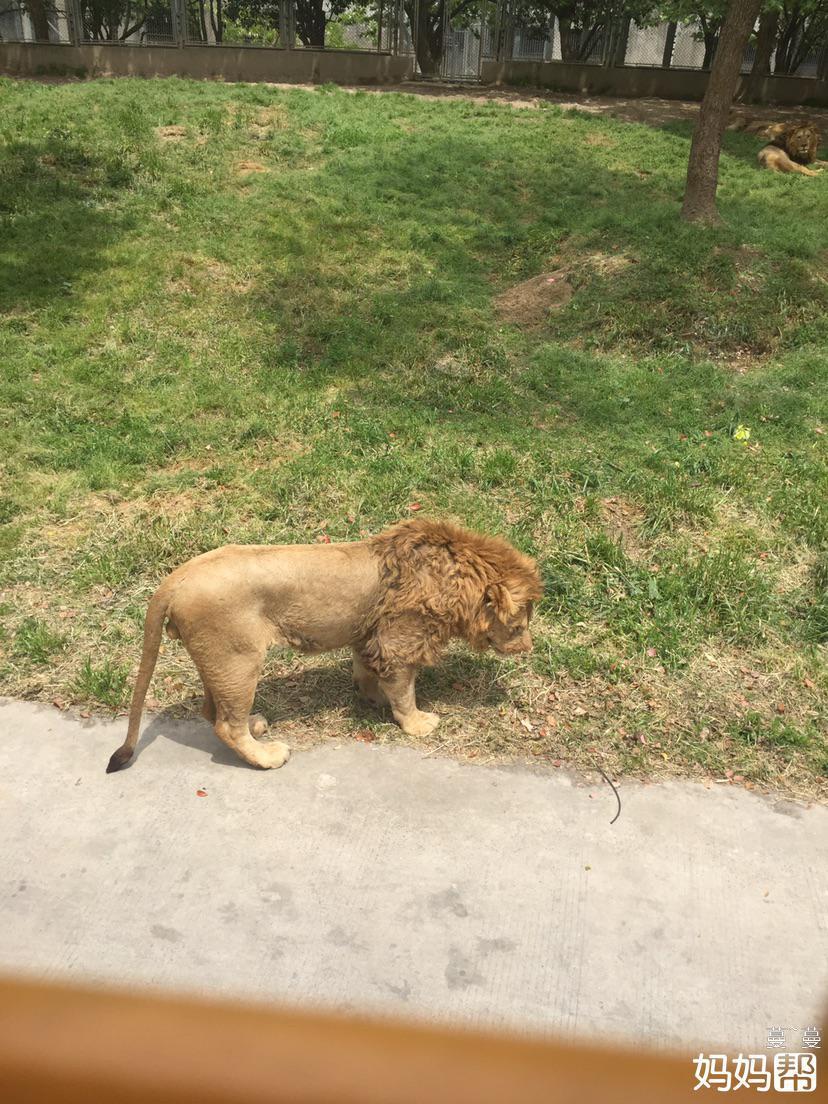 城市美丽时刻# 上海野生动物园