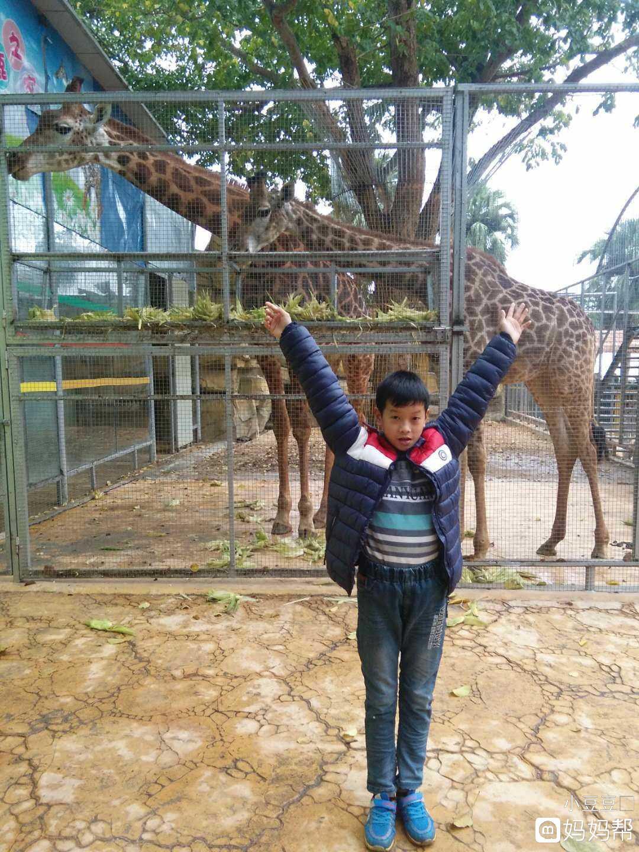寸金公园动物园一天游,这么冷的天也阻不