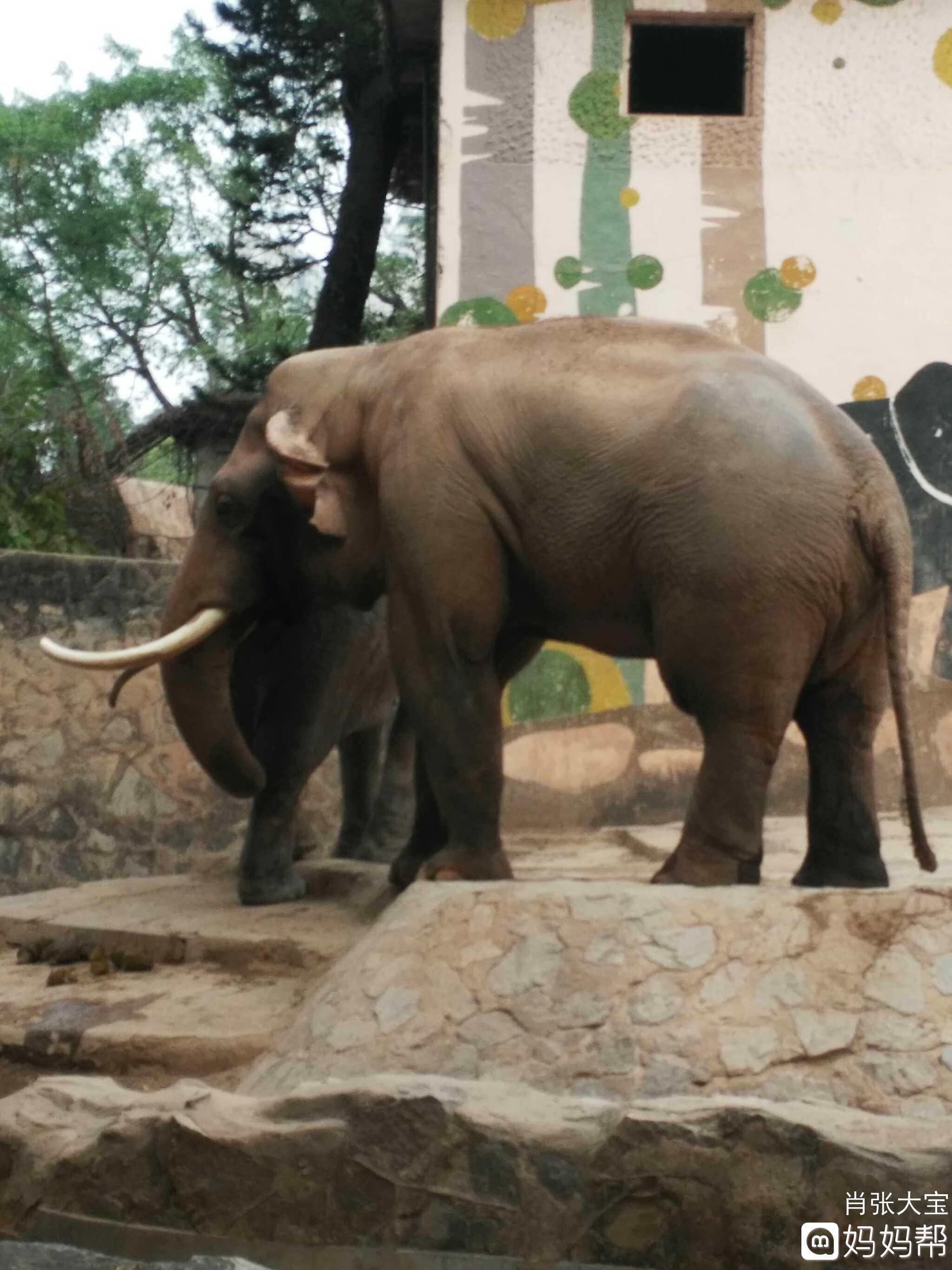 壁纸 大象 动物 2048_2731 竖版 竖屏 手机