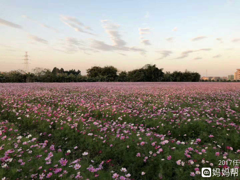 壁纸 成片种植 风景 花 植物 种植基地 桌面 1440_1080