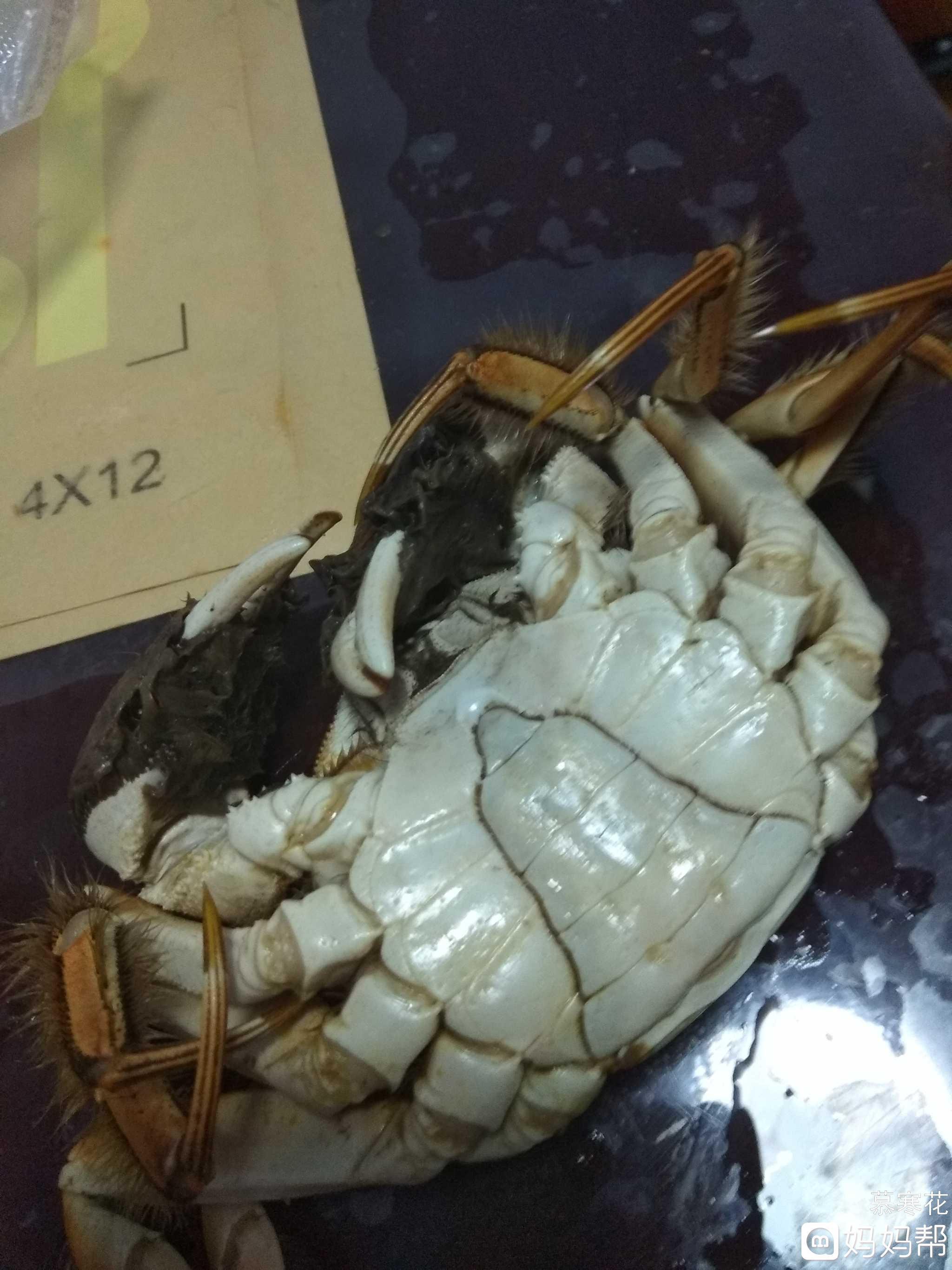 饺子下来啦茴香苗除了包河蟹还能怎么吃图片
