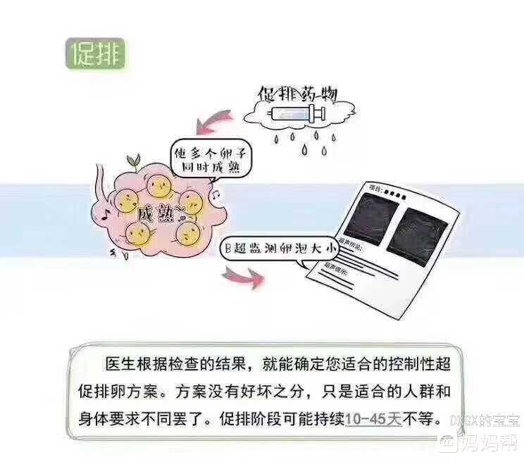 试管婴儿流程(转发)