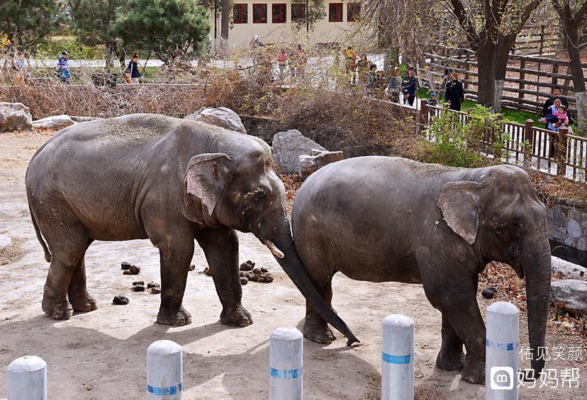 小朋友最爱的动物园