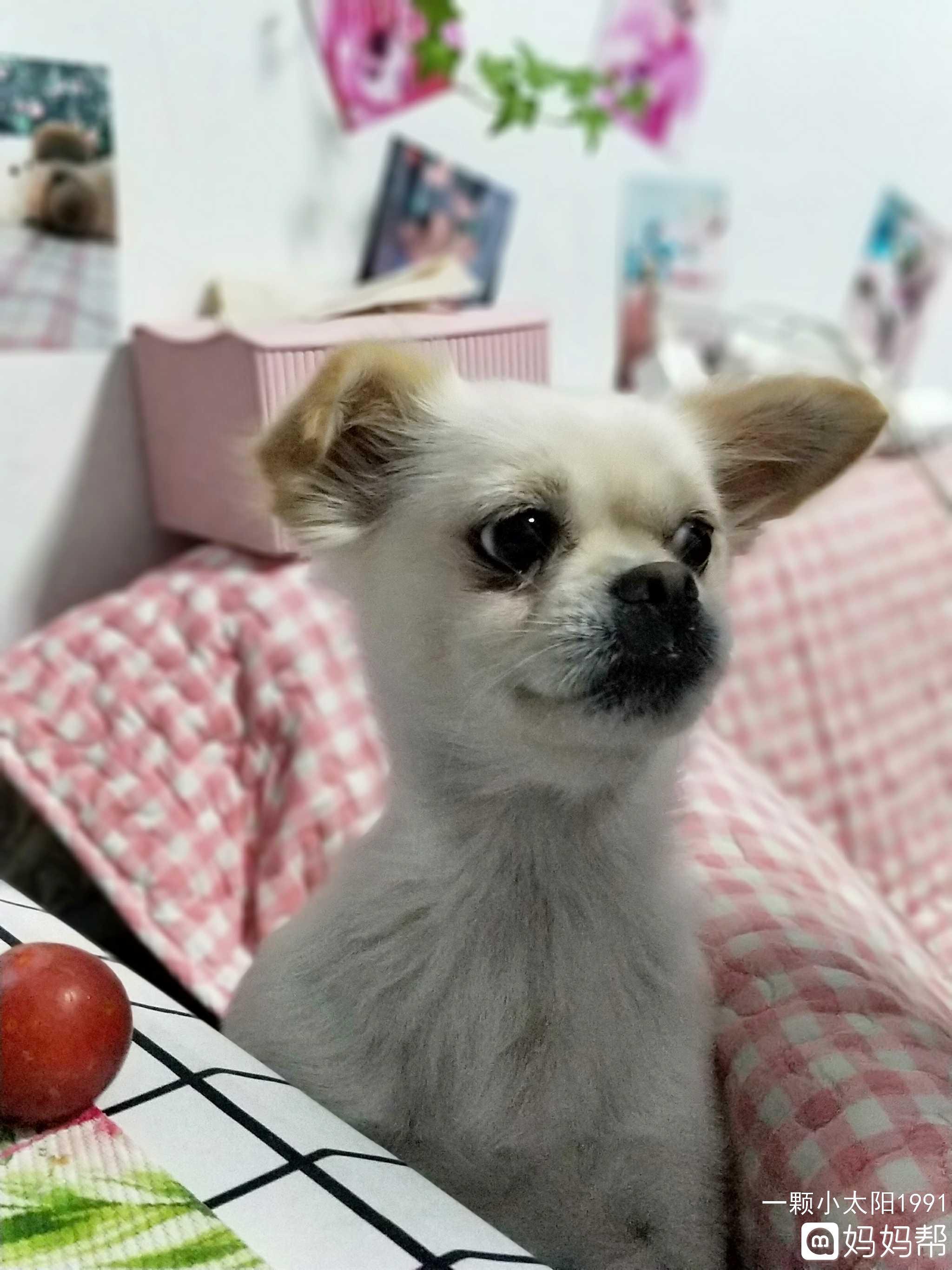 喂杜宾犬吃零食的注意事项,杜宾犬喂养方法_腾讯网