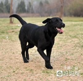 大黑狗与美女-播放_我就很喜欢养宠物,家里还有只大黑狗,特