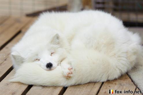 据说冬天里的动物,都是一种液体
